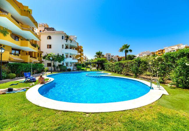 Apartamento en Torrevieja - Alba